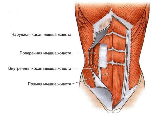 основные мышцы пресса, кора